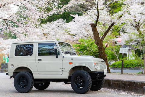 大井川の家山桜トンネルにお花見いってきた