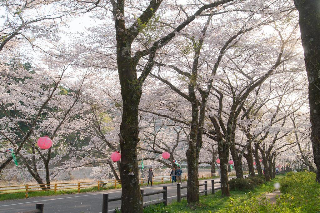 20190406163731_0.jpg 家山桜トンネルの北側の川沿い