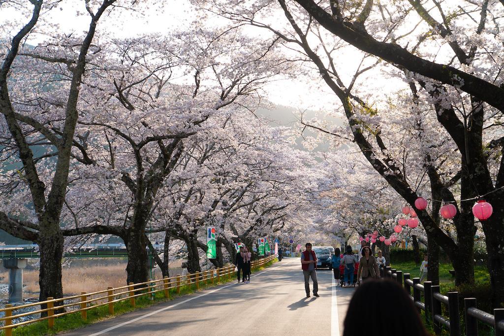 20190406164046_0.jpg 家山桜トンネル北側の川沿い