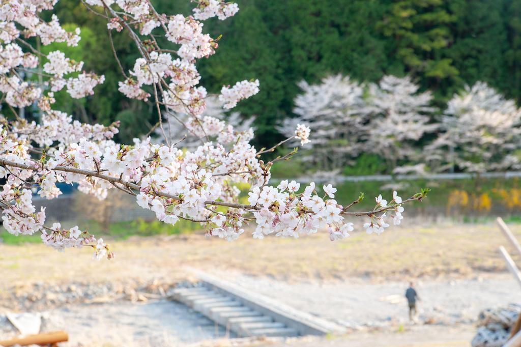 20190406165653_0.jpg 家山桜トンネル