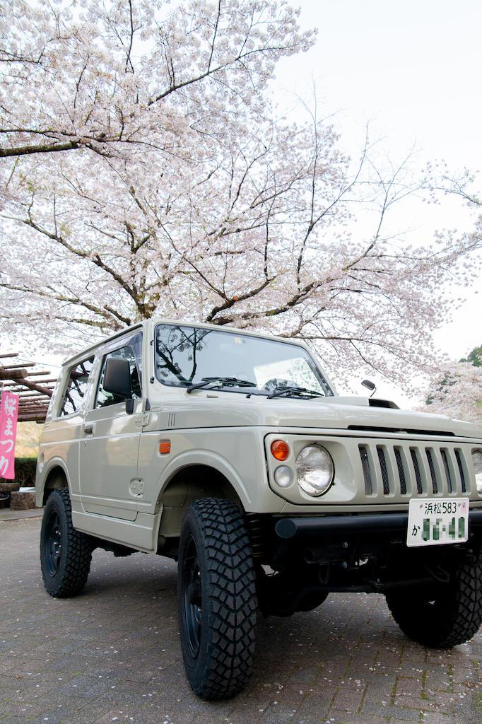 20190406171809_0.jpg 家山桜トンネル