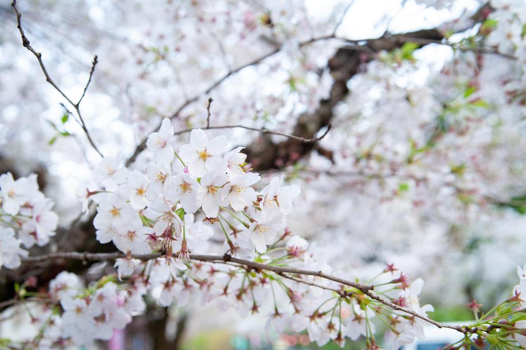 20190406172734_0.jpg 家山桜トンネル